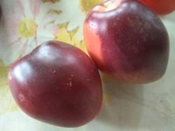 помидоры КАЗ21.jpg