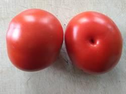 помидоры Red Rock.jpg