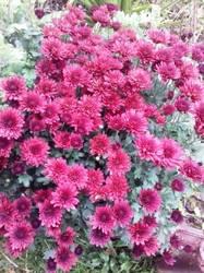 Мои цветы 2019