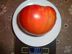 Исонер (А) вес 08.08.19у.jpg