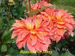 Banshu No Mary.jpg