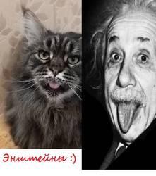 Энштейны :)