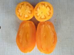 помидоры Оранжевое совершенство1.jpg