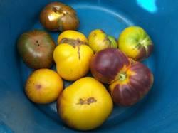 помидоры Afternoon Delight и Странная вещь.jpg