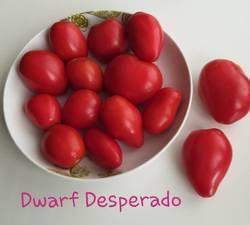 Dwarf Desperado .jpg