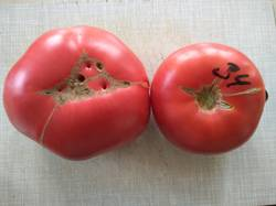 помидоры пересорт Красного брендивайна Розовый брендивайн.jpg