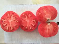помидоры Авентюняй1.jpg