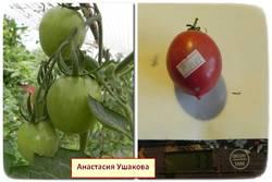 Анастасия Ушакова.jpg