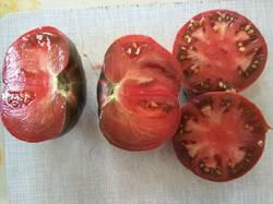 помидоры Варшава очень похожи с Радонили1.jpg