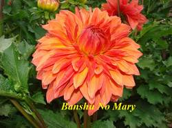 Banshu No Mary (3).jpg