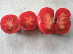 помидоры Июньские.jpg