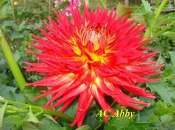 AC Abby (7).jpg