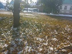 2019-11-05 11-52-58 После снегопада,начался листопад
