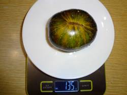 Зеленая богиня ксанаду (Т) вес 16.08.19у.jpg