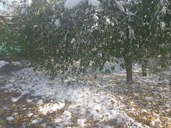 2019-11-05 11-53-05  После снегопада,начался листопад