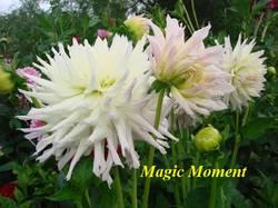 Magic Moment (1).jpg