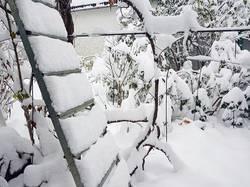 2019-11-02_08-14-00_154 Вторые сутки идёт снег.-2 градуса. 02.11.2019 г.