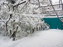 2019-11-02_08-14-16_873 Вторые сутки идёт снег.-2 градуса. 02.11.2019 г.