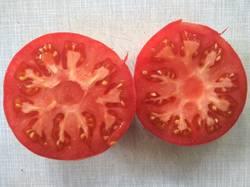 помидоры Китайский розовый1.jpg