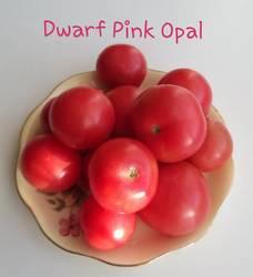 Dwarf Pink Opal .jpg