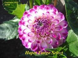 Hapet Tango Select (2).JPG