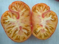 помидоры Afternoon Delight3.jpg