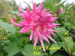 Wyn's Radiant Star (1).jpg
