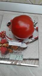 Яблочный липицкий.jpg
