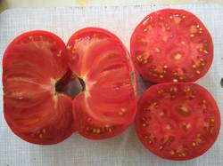 помидоры пересорт Красного брендивайна Розовый брендивайн1.jpg