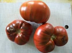 помидоры Лавандовое озеро.jpg