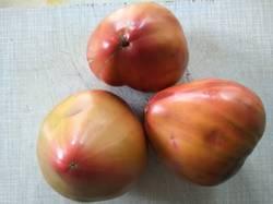 помидоры Триколор.jpg