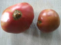 помидоры Сердце ананасное.jpg