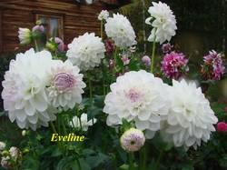 Eveline (1).JPG