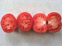 помидоры Red Rock1.jpg