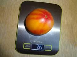 Козуля 156 (Д) 31.08.19 весу.jpg