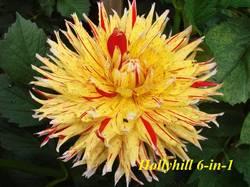 Hollyhill 6-in-1 (2).JPG