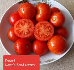 Dwarf Dean's Brad Gates .jpg