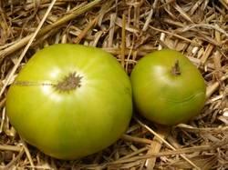 Grub's Mystery Green