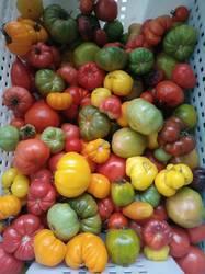 помидоры, 07.11.19