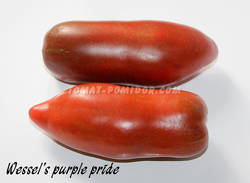 Wessel's purple pride