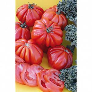 tomato-canestrino.thumb.jpg.c7610f9904535eab1b692076fc28bd23.jpg