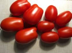 помидоры пересорт Грушевого апельсина4.jpg