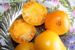 Apricot Brandywine