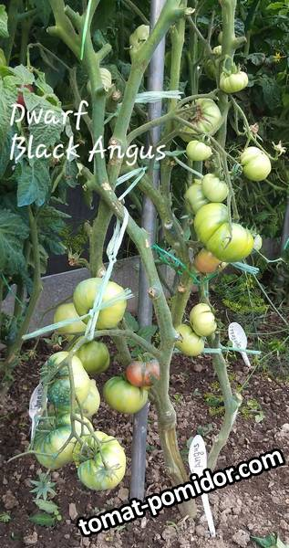 large.254598194_BlackAngus2019.jpg.a9f503e4acb0ffb3b92e36e772b14921.jpg