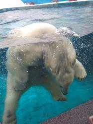 поразил белый медведь3.jpg
