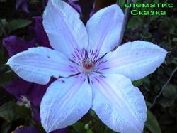 181037_640x480_Photo0208_1.jpg
