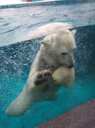 поразил белый медведь1.jpg