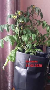 IMG-20200227-WA0033.thumb.jpg.b6c4999a5ff73adbce96b8efd362184e.jpg