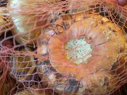 гладиолусы луковицы на хранении5.jpg