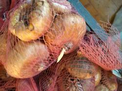 гладиолусы луковицы на хранении3.jpg